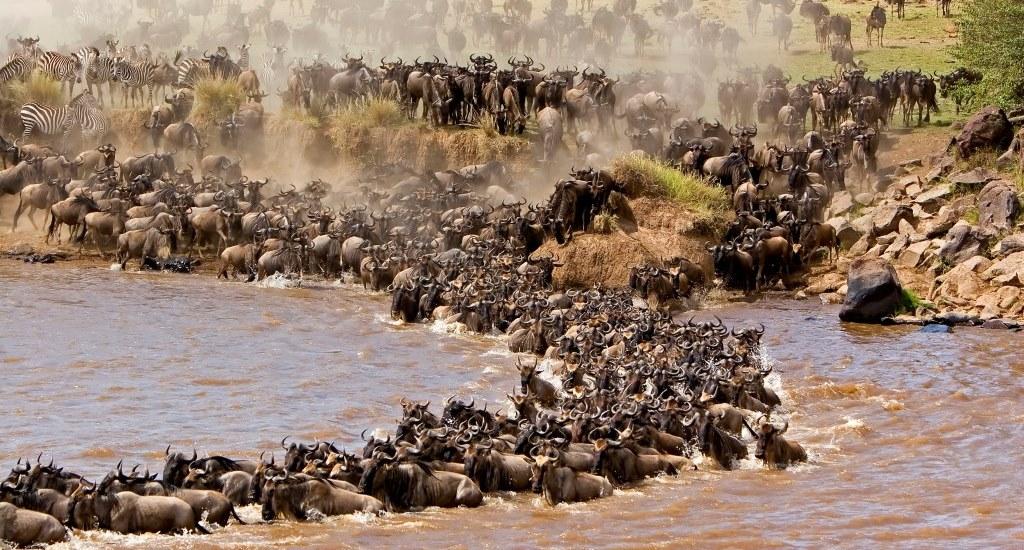 Christmas in the Wild: Just Mara (Road Safari)