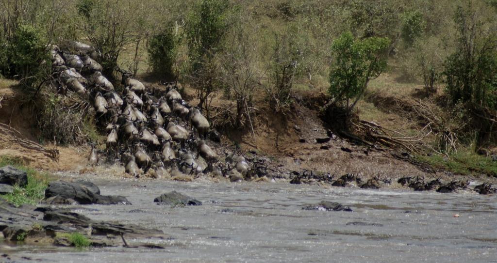 Maasai Mara Flying Package