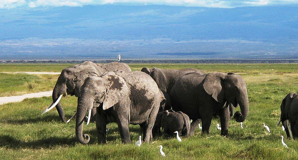 Raydoll Amboseli Elephants Kenya
