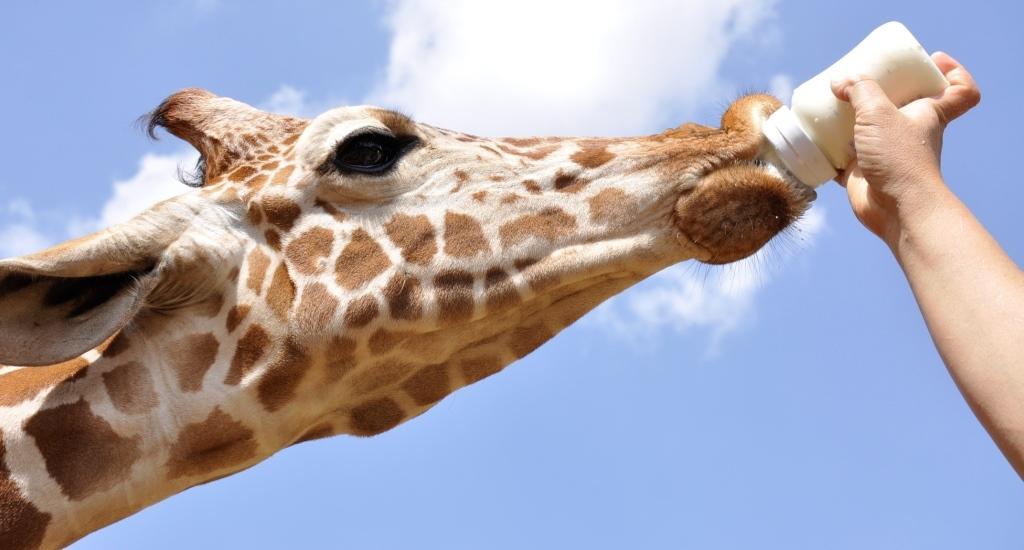 Nairobi National Park and Animal Orphanage (Half Day)