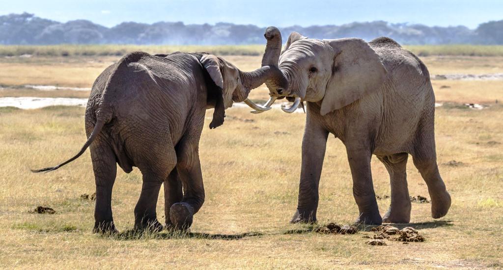 Kenya Fly-In Safaris